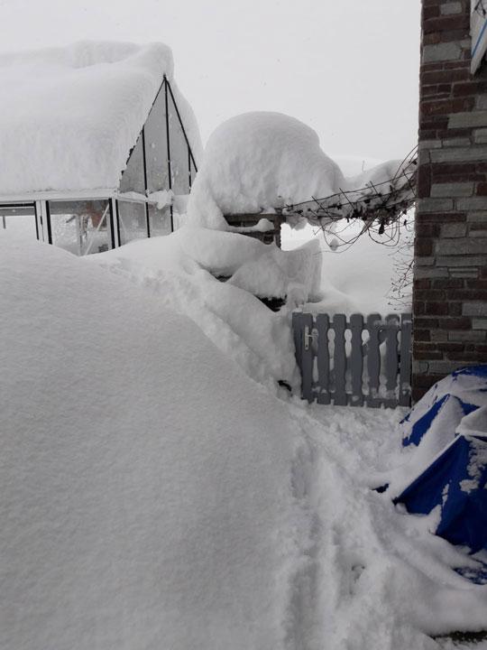 Gewächshaus von Palmen nach starkem Schneefall.jpg