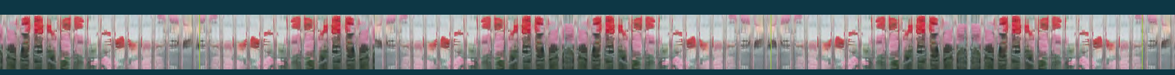 Glashausexperte_Palmen_Verglasung_8mm_Makrolon_Hauptkatalog_2020_Seite_197.png