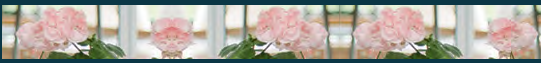 Glashausexperte_Palmen_Verglasung_Vorteile_Kglas_Hauptkatalog_2020_Seite_196.png