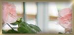 Gewächshaus Verglasung Einscheibensicherheitsglas 4-6 mm